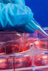 Франция намерена сделать стволовые клетки доступными по цене