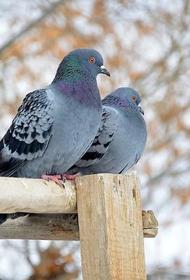 Массовую гибель птиц зафиксировали в Краснодарском крае