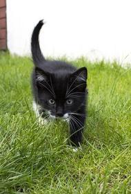 Власти Забайкалья спасли кошку из Китая