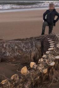 Мощный ураган вынес на побережье Шотландии гигантский скелет таинственного существа