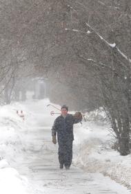МЧС предупреждает об усилении ветра в Москве