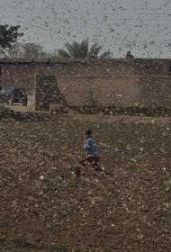 В Иордании готовятся к нашествию саранчи