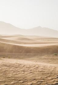 Сахара: под песками нашли десятки тысяч окаменелых костей