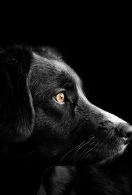 Ученые: обнаружена уникальная особенность собачьего носа