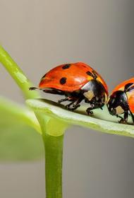 Почему русские люди не могут питаться насекомыми, как азиаты, рассказала диетолог
