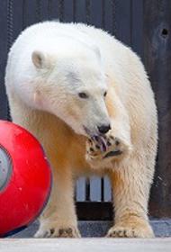 Нефтяники спасают белых медведей