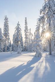 Телеведущий: Суровые зимы еще вернутся