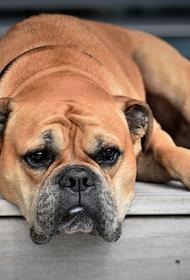 Кинолог рассказала, действительно ли служебных собак кормят запрещенными веществами