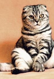 В Аэрофлоте опровергли данные о гибели двух котов и обморожении третьего