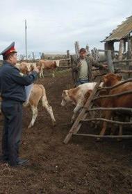 Полицейские получили по пять лет строгого режима за кражу стада коров и избиение пастуха