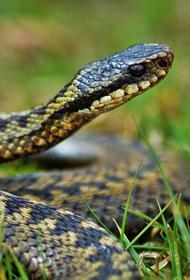 В Подмосковье проверили информацию о появлении новых ядовитых змей