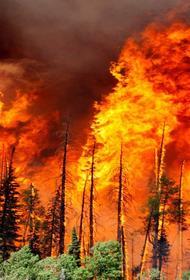 «Бунт Земли». О пожарах в Австралии и Сибири