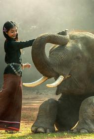 В Таиланде для слонов играют на фортепиано и устраивают спа-процедуры