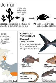 Раскрыта тайна отравлений от даров тропических морей