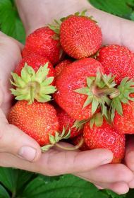 На Южном Урале увеличили субсидии для садоводов