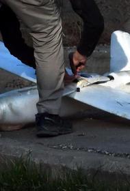 Неподалеку от базы Хмеймим в Сирии сбили беспилотник