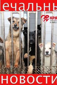 Приют для животных «Краснодог» прекращает своё существование с 1 мая 2020 года