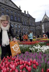 В Нидерландах уничтожили 400 миллионов тюльпанов. Из-за пандемии коронавируса они никому не нужны