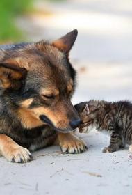 Отряд волонтеров начали помогать бездомным животным в Краснодаре