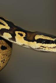 Австралийке пришлось спасать детей от змеи у крыльца своего дома