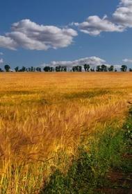 Заморозки и дефицит влаги снизят урожайность зерновых в этом году