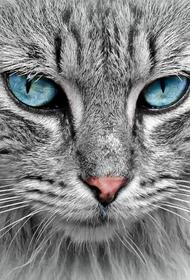 Во Франции оштрафовали мужчину, нарушавшего самоизоляцию с котом на поводке