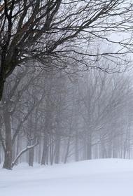 Климатолог заявил, что метель в апреле не является аномалией