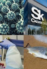 В Сколково изобрели хлорку и попытались воскресить рыбу