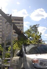 В Москве из-за сильного ветра дерево упало на два автомобиля