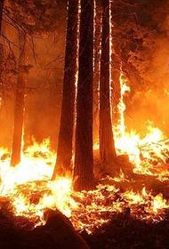 Специалисты Рослесхоза предупредили о риске возникновения лесных пожаров в Сибири