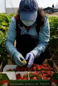 В Европе из-за пандемии COVID-19 будет некому  собирать урожай
