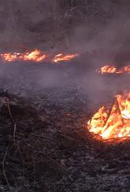 Чернобыльский лес подожгли, чтобы скрыть хищения на стройке хранилища ядерных отходов