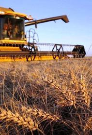 Впервые за последние десять лет мир рискует остаться без российской пшеницы