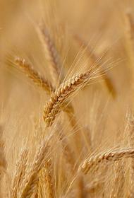 Многие страны мира опасаются дефицита российской пшеницы