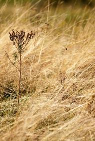 Кузбасс: мужчина поджег сухую траву, чтобы сделать парк чище