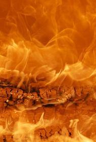 В Подмосковье произошел пожар в лесу. Подозреваемый задержан