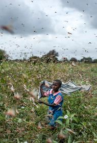 Своевременная благотворительность. В разгар пандемии Правительство России выделило 10 млн. долларов на борьбу с саранчой в Африке