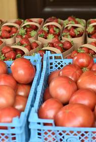 В Краснодарском крае фермеры ежедневно реализуют порядка 70 тонн овощей