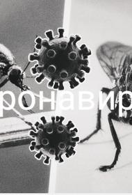 Российский медик оценил возможность распространения COVID-19 мухами и комарами