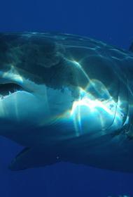 Побережье Испании облюбовали агрессивные тигровые и бычьи акулы