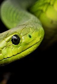 В московской квартире  обнаружили «агрессивную» змею