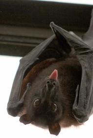Мясников рассказал, что за этот век COVID-19 – третий вирус, передавшийся людям от летучих мышей