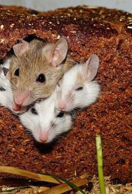 Путин рассказал о чувстве благоговения после доклада о гуманизации мышей