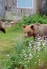Сидим дома: по Таллину бродят два медведя