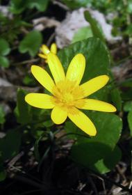 В Рузе исследователи обнаружили редкие краснокнижные цветы и грибы