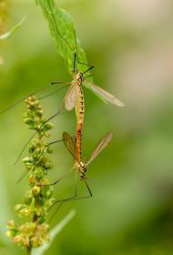 Учёные дали объяснение нашествию комаров в Нижегородской области