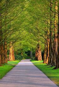 Академик РАН призвал разрешить прогулки в парках Москвы