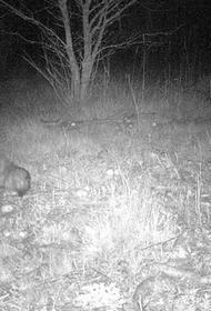 В Чернобыле подловили собак, воровавших яблоки