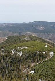 В Госдуме озаботились нехваткой средств у регионов на тушение лесных пожаров