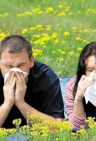 Латвийский врач: Наступает время аллергии